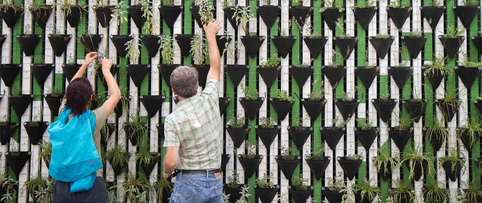 represenative design image of plants